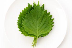 4 Ways To Enjoy Shiso (Japanese Basil) Recipes