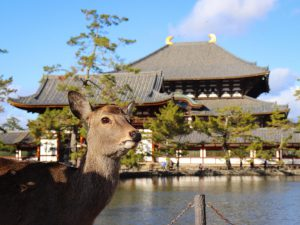 10 Best Temples and Shrines To Visit in Nara